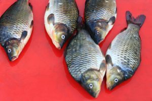 vis en rode achtergrond website stijl